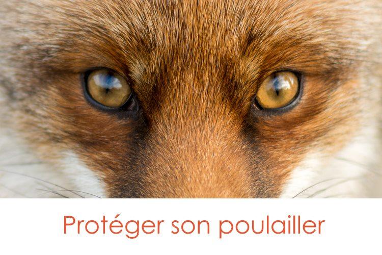 proteger-son-poulailler