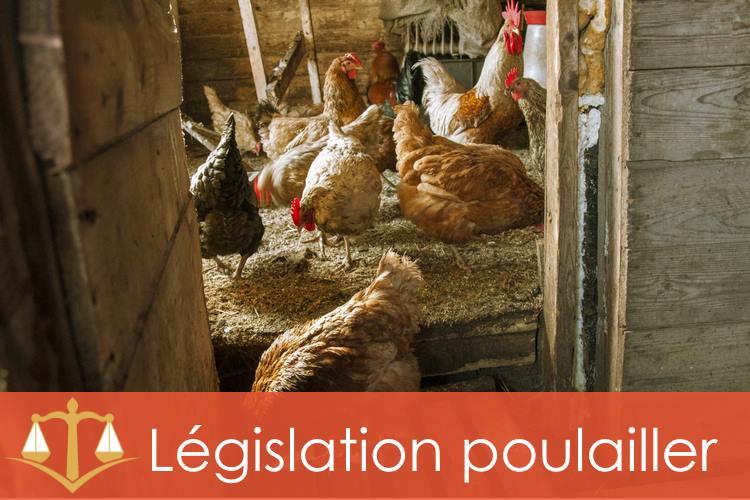legislation-poulailler