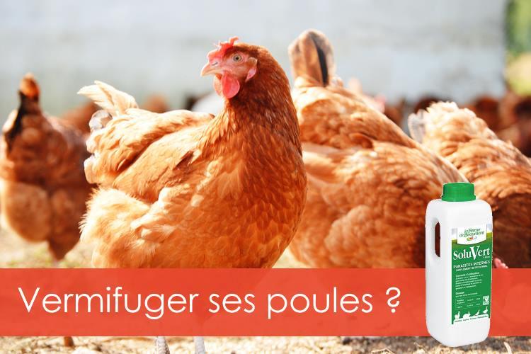 vermifuger-ses-poules