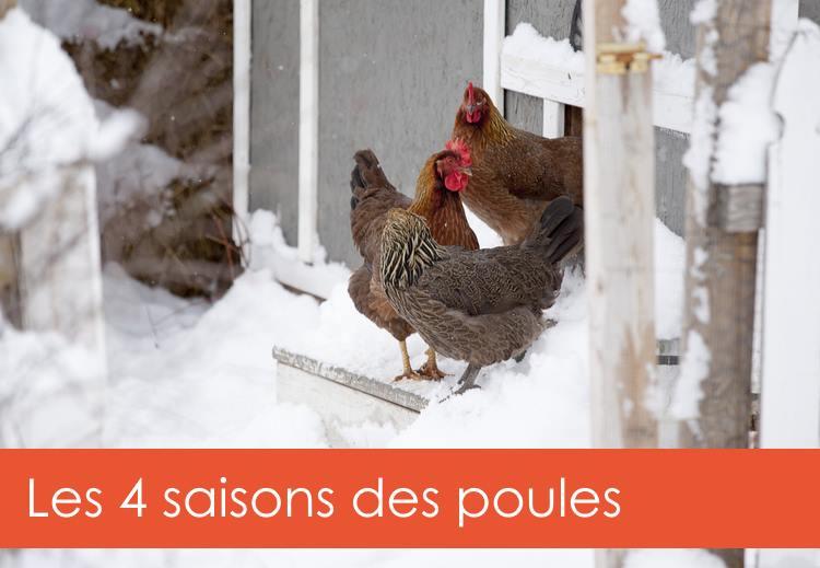 4-saisons-poules