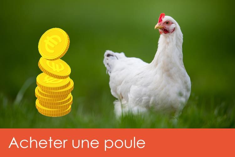 acheter-une-poule