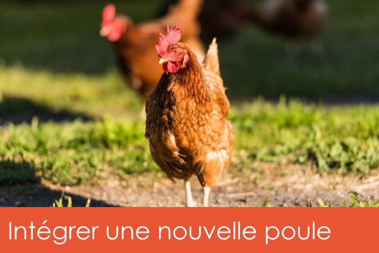integrer-nouvelle-poule
