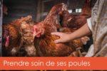 prendre-soin-des-poules