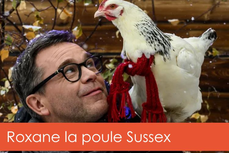 roxane-poule-sussex