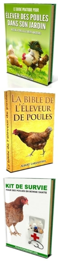 guides-elevage-poules