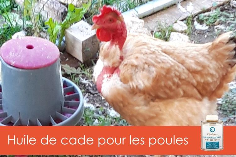 huile-de-cade-poules